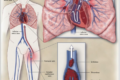 SARS-Cov-2 e i vaccini: la ricerca sul rischio di trombosi